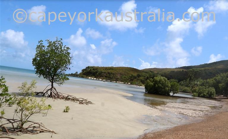 cape flattery connie beach vegetation