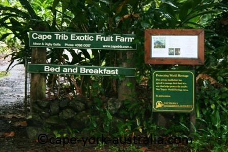 exotic fruit farm