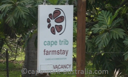 cape tribulation farmstay