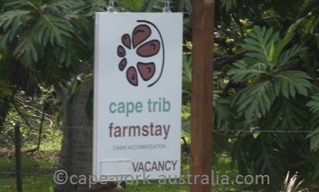 cape tribulation farmstay