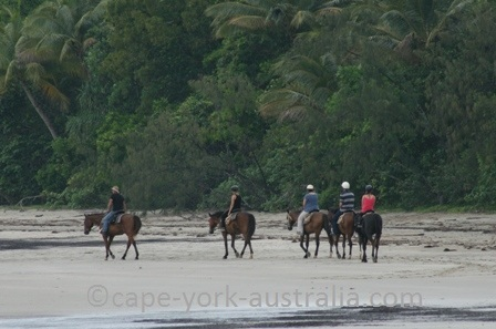 cape tribulation horse riding