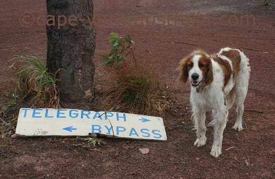 cape york bring a dog