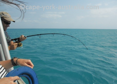 cape york fishing