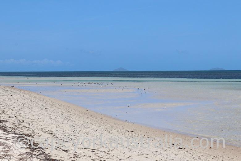 moa island beach