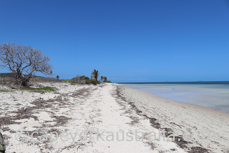 moa st pauls beach