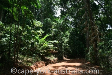 cape york rainforest