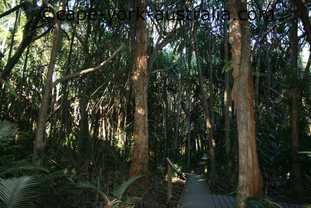 centenary lakes rainforest boardwalk