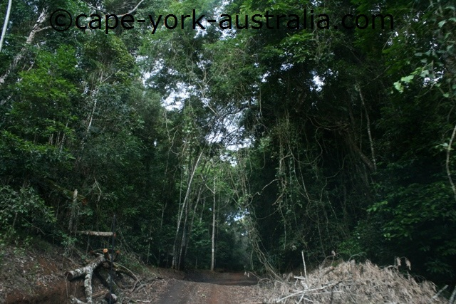 clohesy river road rainforest
