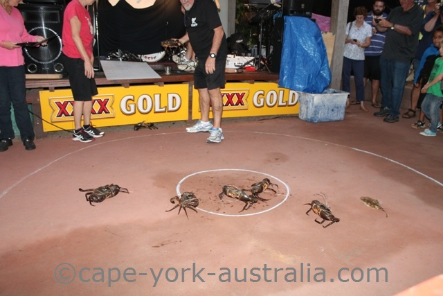 cooktown festival crab races