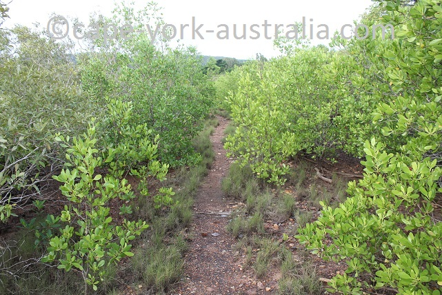 cooktown scenic rim walk