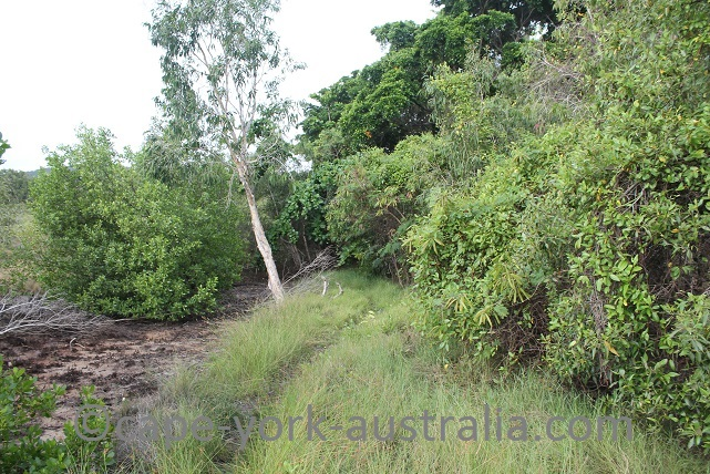 cooktown scenic rim walk adelaide st end