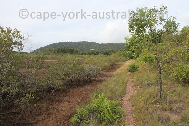 cooktown scenic rim walk mangrove line