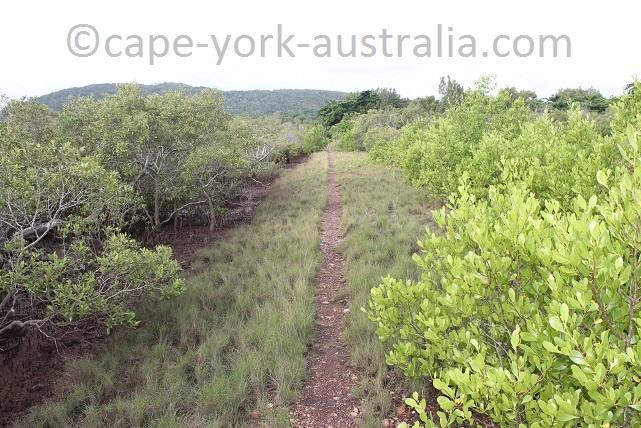 cooktown scenic rim walk mangroves