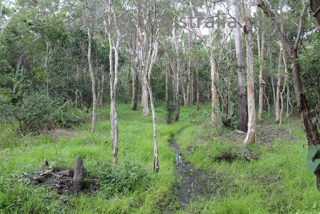 cooktown scenic rim walk melaleuca swamp