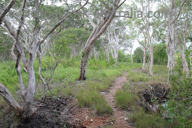 cooktown scenic rim walk open forest