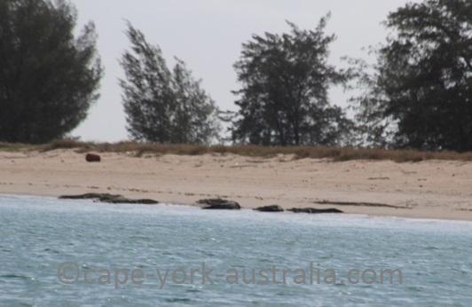 crab island crocodiles