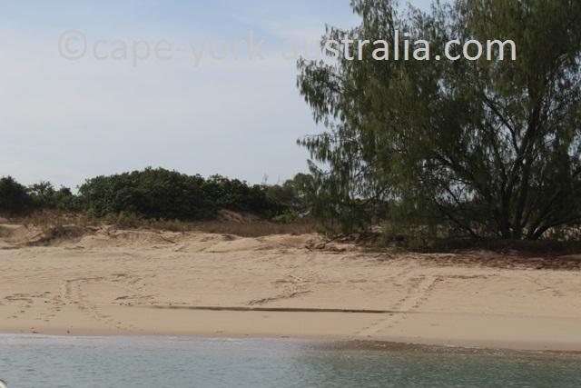 crab island turtle tracks