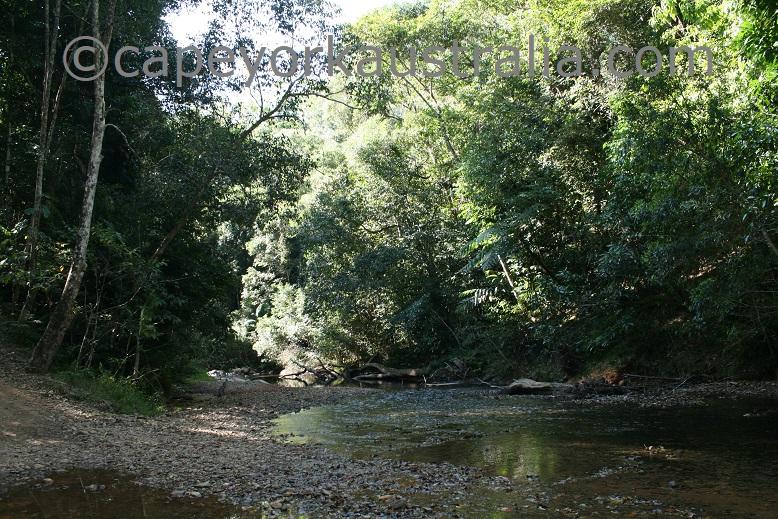 creb track rainforest