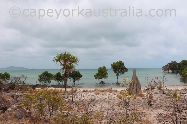 crocodile creek termite mounds
