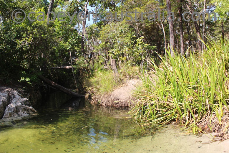 cyprus creek swimming hole
