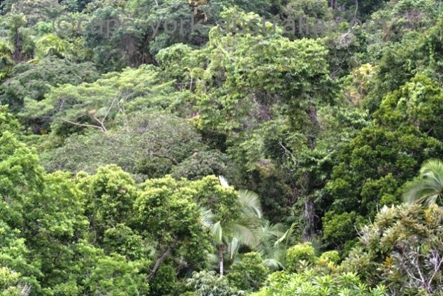 daintree discovery centre rainforest canopy