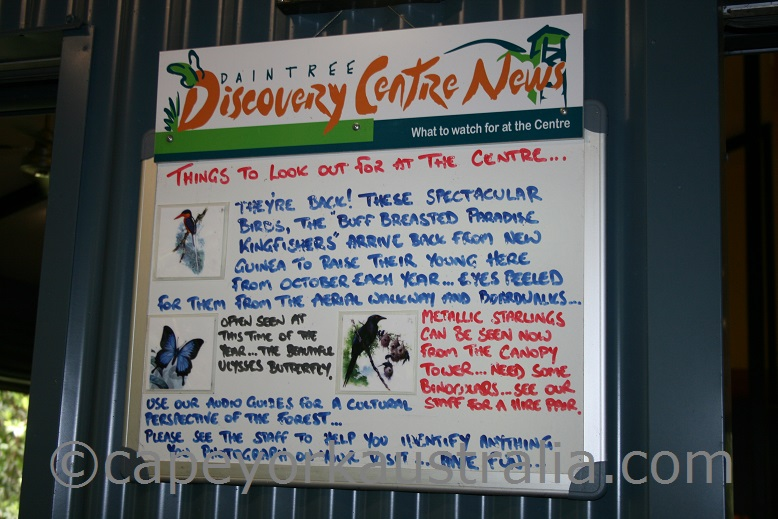 daintree discovery centre things to do