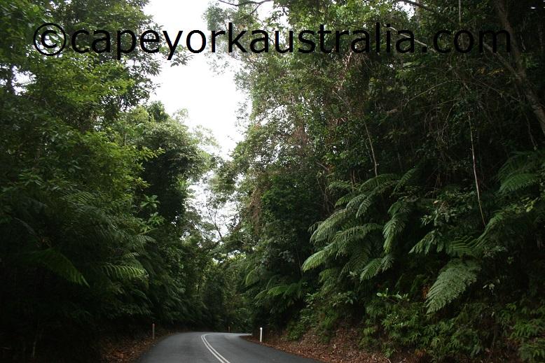 daintree rainforest drive