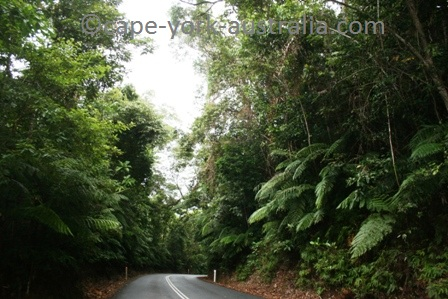 daintree rainforest location