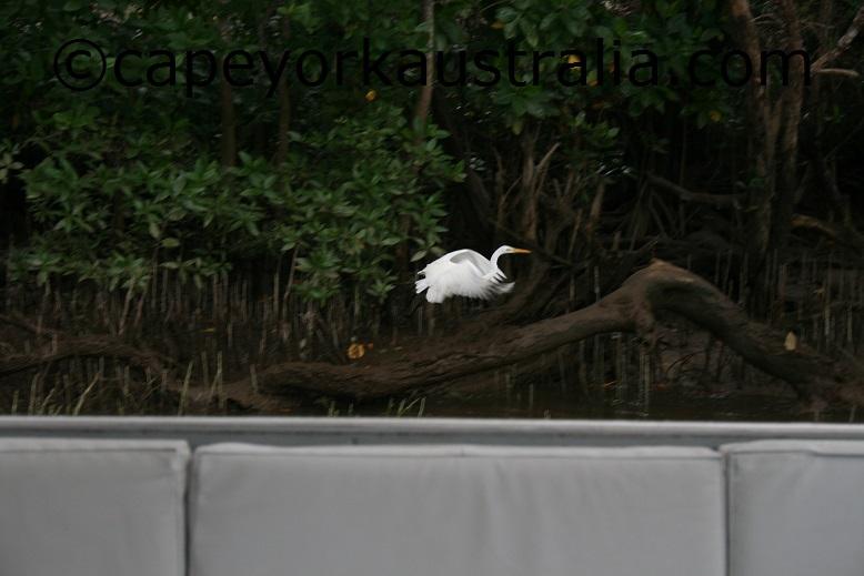daintree river wildlife