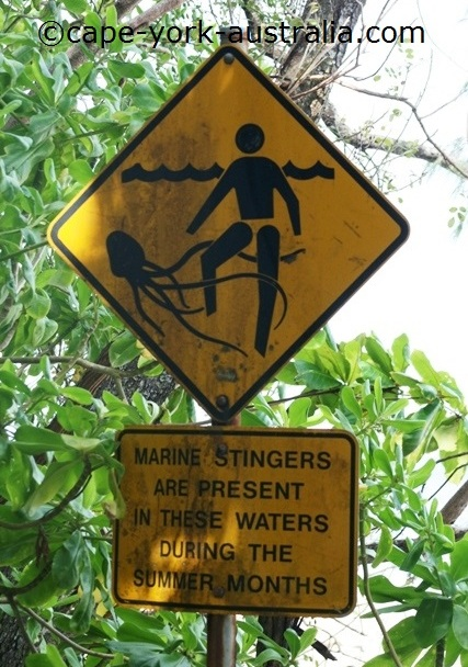 dangerous jellyfish