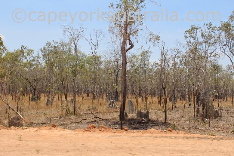 dixie koolatah road magnetic termite mounds