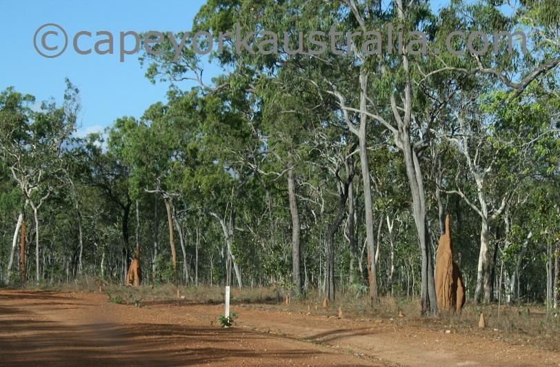 dry open woodland