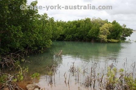endeavour river national park