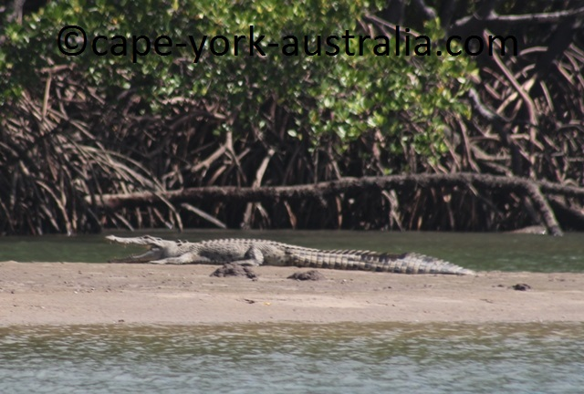 escape river area crocodile