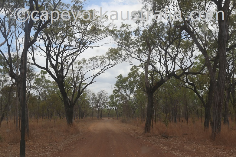 fairview to wrotham road stringybark trees
