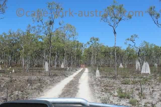 falls track termite mounds