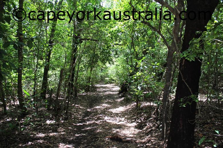 five beaches rainforest track