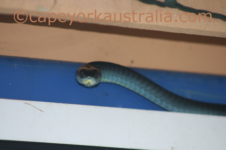 green tree snake agitated