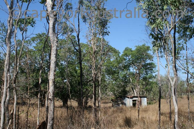 hamilton goldfield tin shack