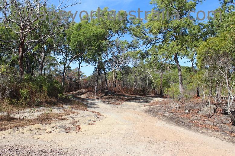 horn island wasaga tracks