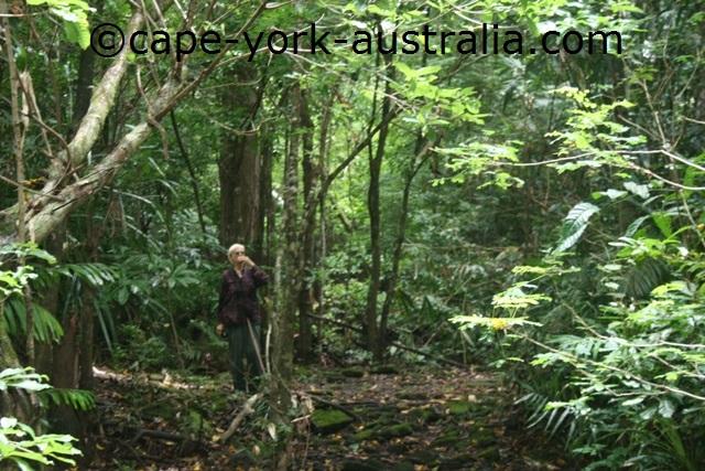 iron range bush walking