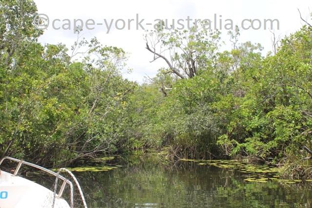 jardine river freshwater arm
