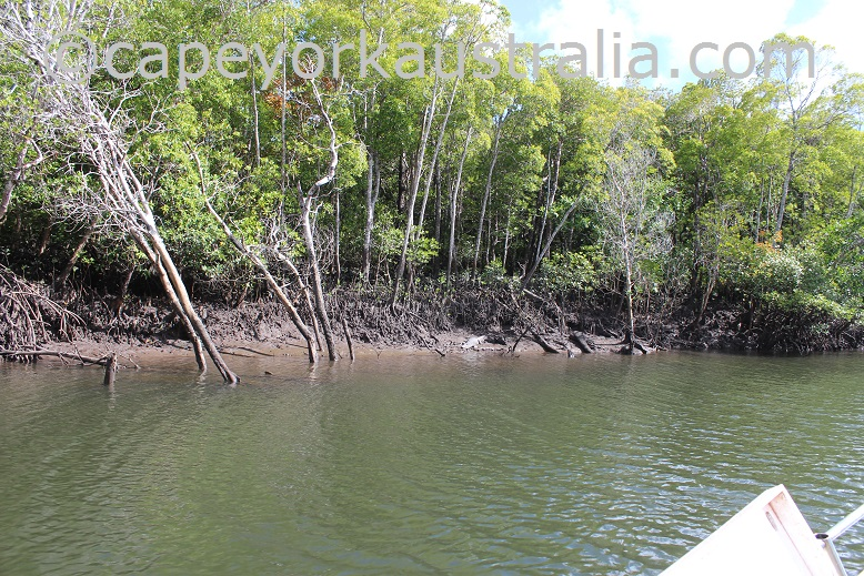 jardine river national park mangroves