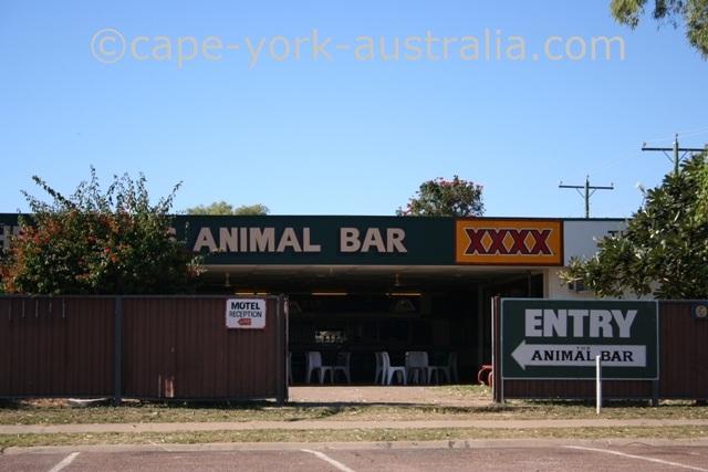 karumba animal bar