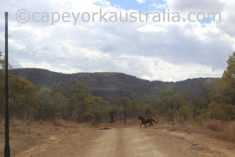 kondiparinga mt mulligan road wild horse