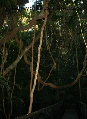 kuranda barron falls rainforest