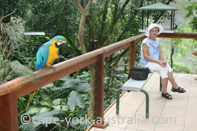 kuranda birdworld macaw