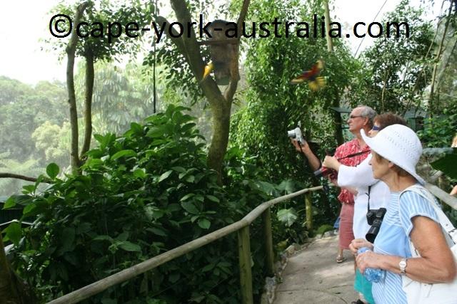 kuranda birdworld parrots