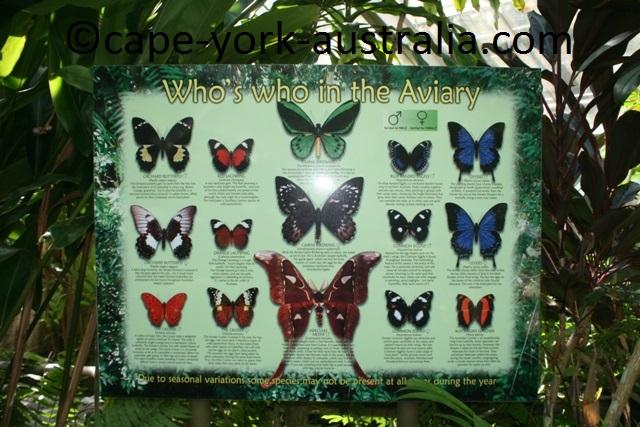 kuranda butterflies