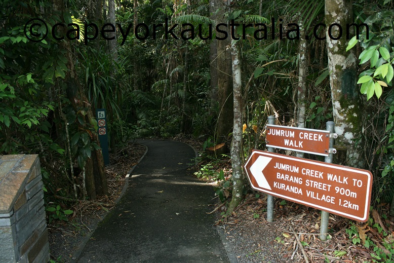 kuranda jumrum creek walk